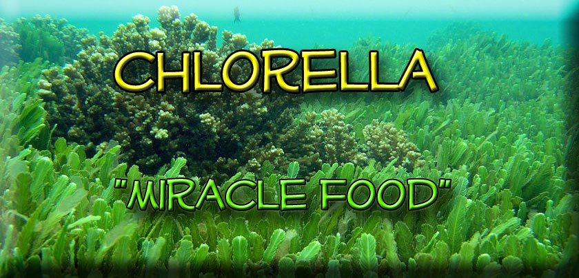 What S The Deal With Chlorella Nic S Healthy Life