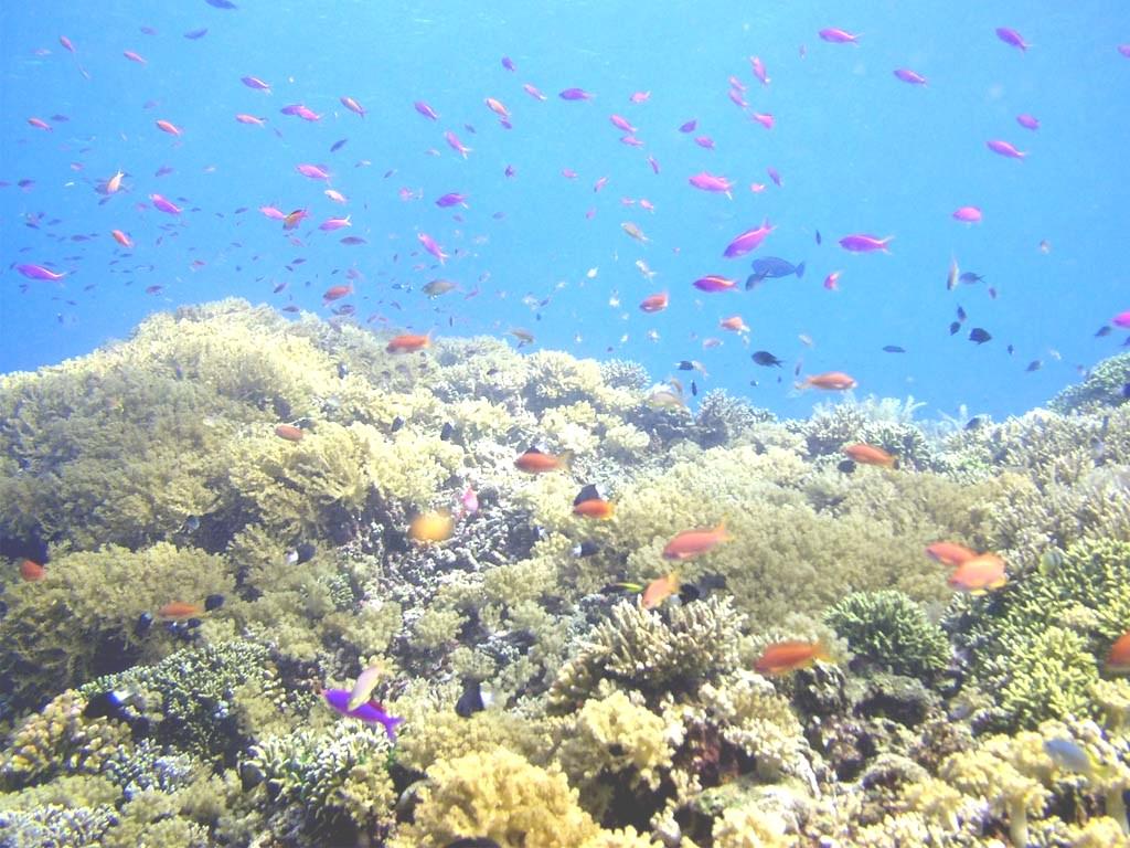 Blog Belajar Ipa Smp Taman Nasional Bunaken Situs Warisan Dunia