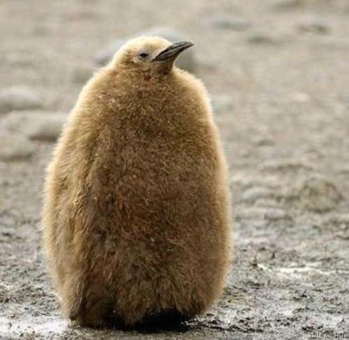 Теги птахи тварини