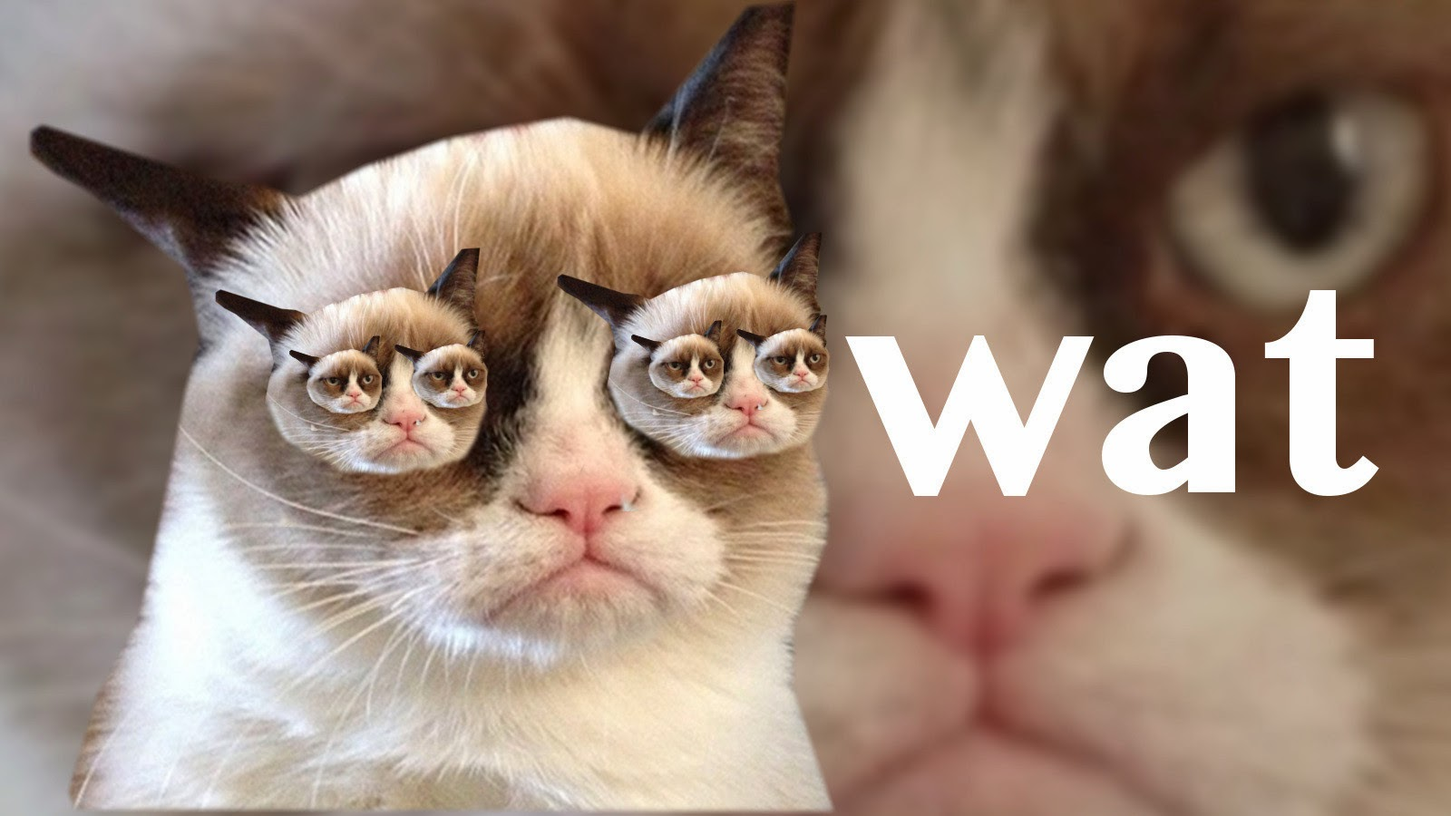 Grumpy Cat Products