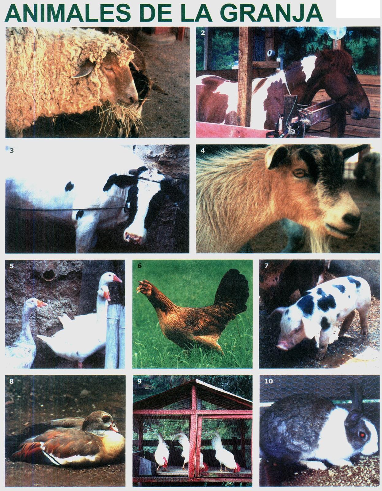 Lamina animales de la granja - Laminas para la pared ...
