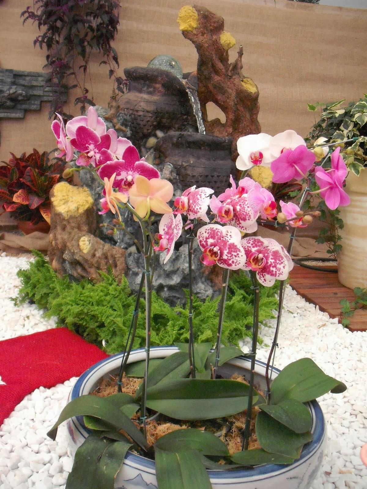 plantas de jardim que gostam de umidade : plantas de jardim que gostam de umidade:As orquídeas phalaenopsis são muito resistentes ao calor e podem