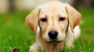 Salah Paham Kita Tentang Anjing