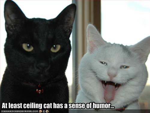 2Leep Onlie: funny cat pictures with captions