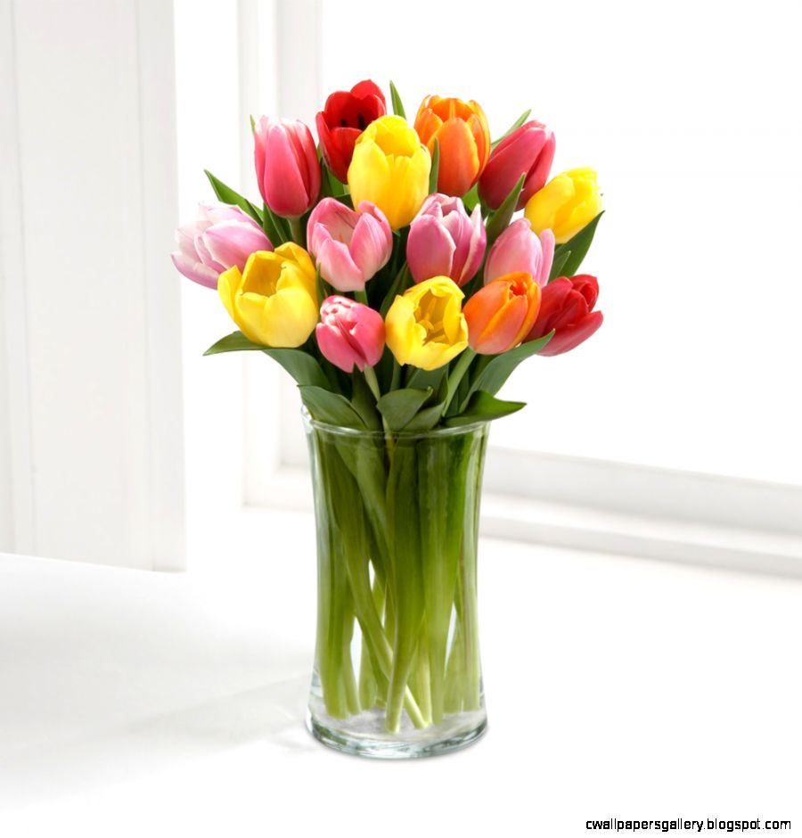 Welcome to  Rush of Color Assorted Tulip