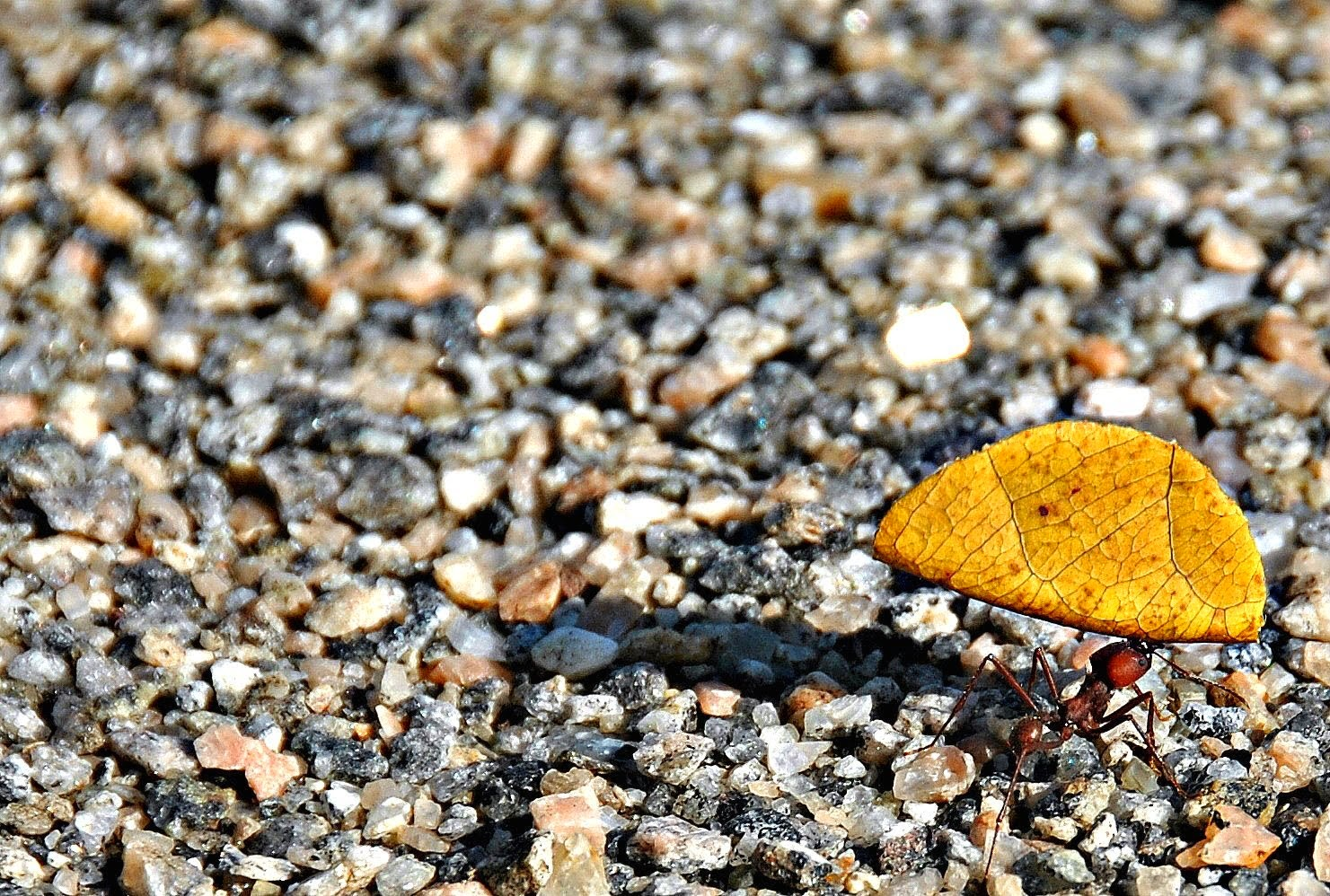 A formiga e a folha