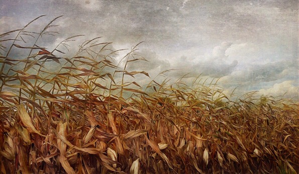 Harvest © Michael Trombley