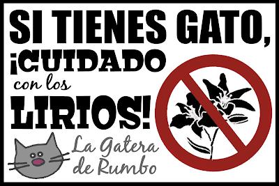 Plantas/flores tóxicas para gatos Si+tienes+gato,+cuidado+con+los+lirios
