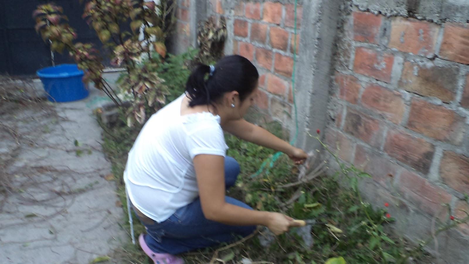 Creando mi jardin como sembrar una planta for Arreglo del jardin