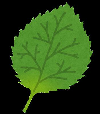 シソの葉のイラスト