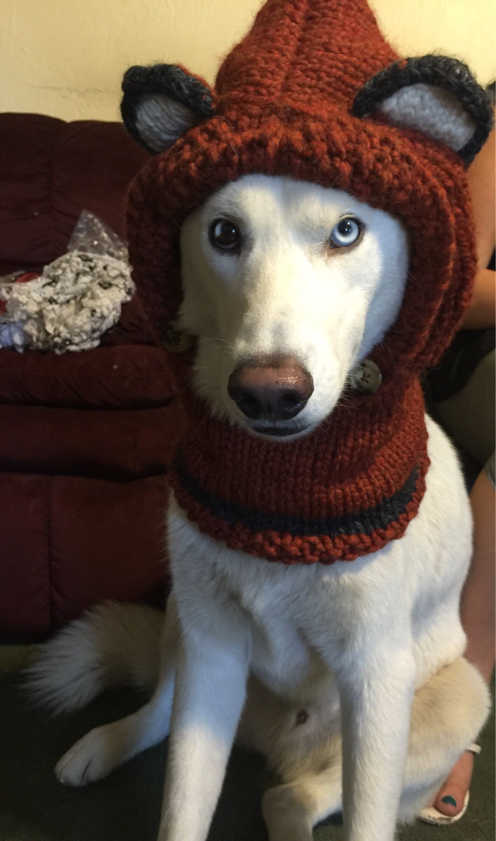 Cute dogs - part 92, best dog photos, funny dog pictures, adorable dog