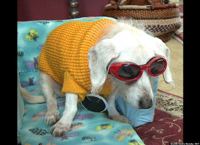The oldest living canine (dog) on the planet