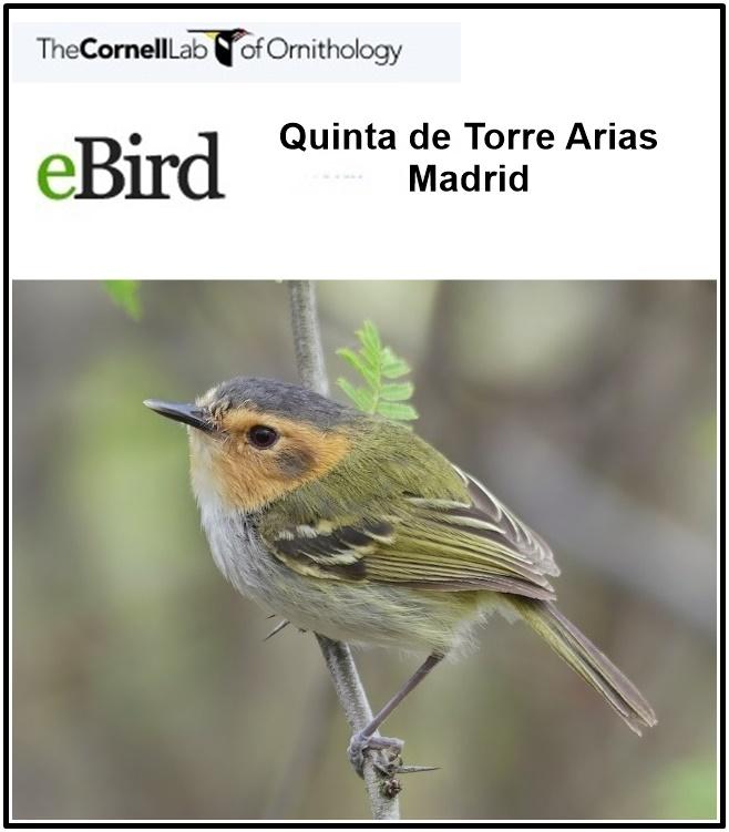 Ornitologia de la Quinta