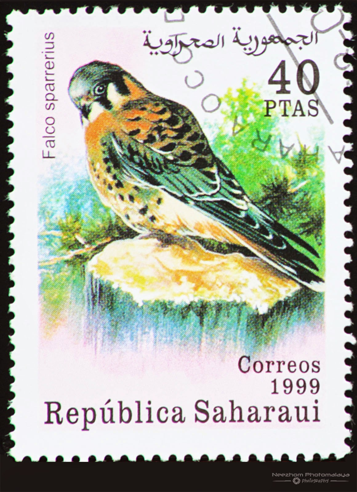 Western Sahara 1999 Birds of Prey stamp - American Kestrel (Falco sparrerius) 40 ptas