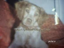 Mi perra Madona