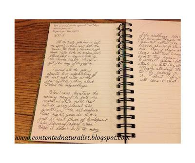 A handwritten journal entry about my garden.