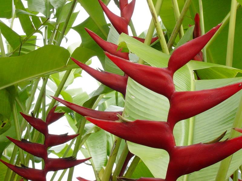 Tropical Flower Names Names of Tropical Hawaiian