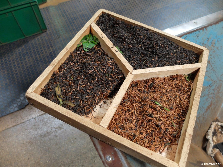 thé noir thé vert thé blanc Glenfold fabrique machines-outils usine de thé noir BOPF Sri-Lanka