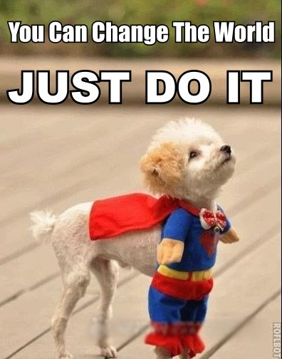 Superman Dog Clothes