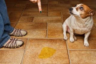 Mascotas, Signos de Alerta