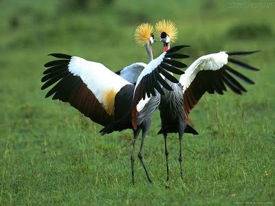Imagens da Natureza - aves