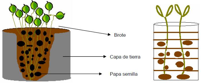 Huerto urbano cultivo de patatas en barriles for Como cultivar patatas