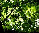Folhas vivas