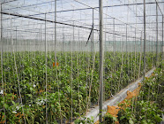 GREEN HOUSE FARM ACI AGRO SOLUTION