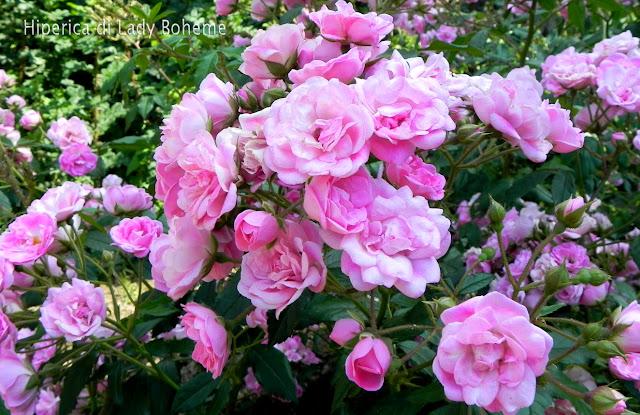 hiperica_lady_boheme_blog_di_cucina_ricette_gustose_facili_veloci_rose_2