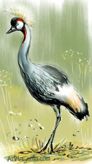 Grey Crowned Crane sketch painting. Bird art drawing by illustrator Artmagenta
