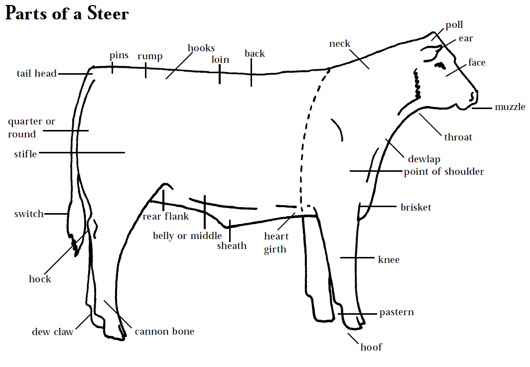 Meat 20clipart 20sketch besides 10 also Post printable Beef Butcher Chart 305092 as well How To Judge Beef likewise Beef Butchering. on cow meat cuts