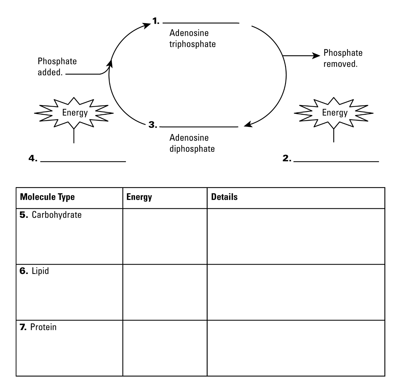 Uncategorized Calvin Cycle Worksheet calvin cycle worksheet free worksheets library download and worksheet