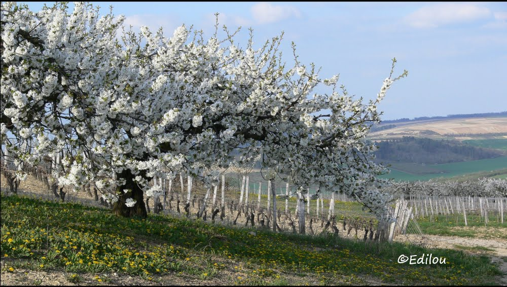 """""""Auprès de mon arbre ..."""", near my tree,      """"около моего дерева, я жил счастливо"""" (Брассенс)"""