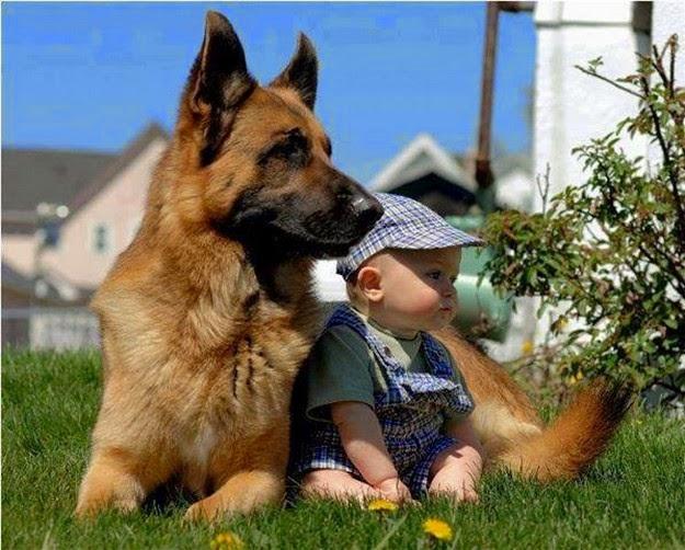 animal-making-love-1
