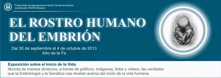 EL ROSTRO HUMANO DEL EMBRIÓN