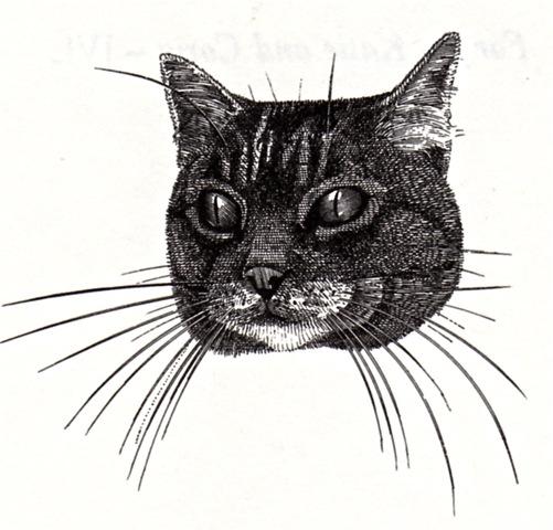 Belling the cat jpeg
