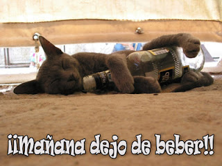 Felino alcohólico