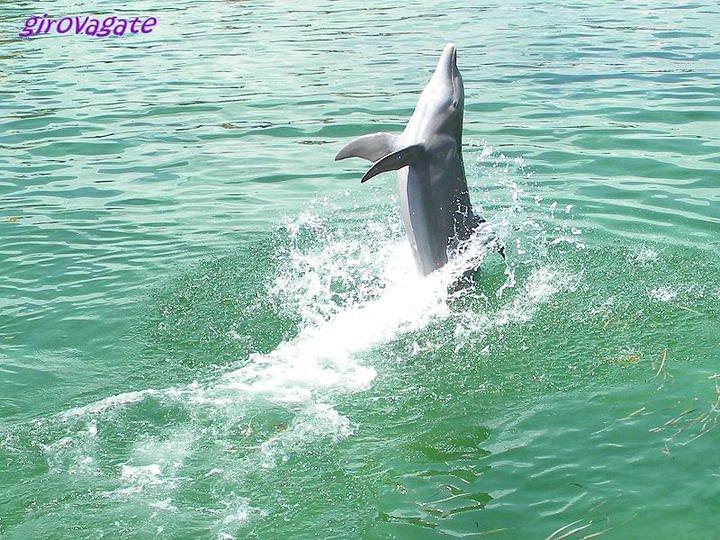 un bagno con i delfini di cuba escursione a varadero verso cayo blanco