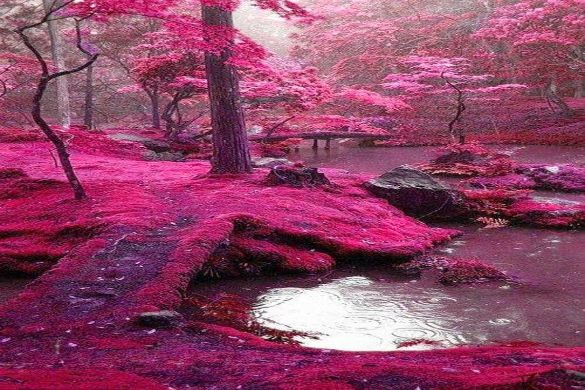 Pink Landscape Alzheimer's Reading Room