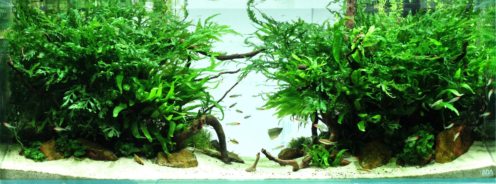 Aquascaping spain the jungle by balbi vaquero - Aquascape espana ...