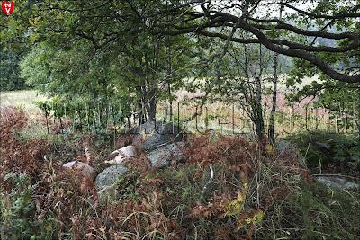 Камни и дуб, как на капище славян
