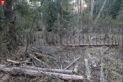 Cоветская пограничная застава. Порубка леса