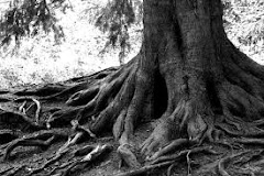 Storms make trees take deeper roots—Dolly Parton