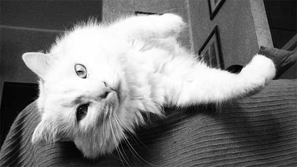 Arredare casa: Tessuti a prova di gatto: il rivestimento ideale per ...