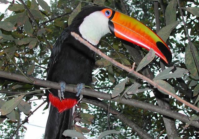 12 fotos incríveis de tucanos