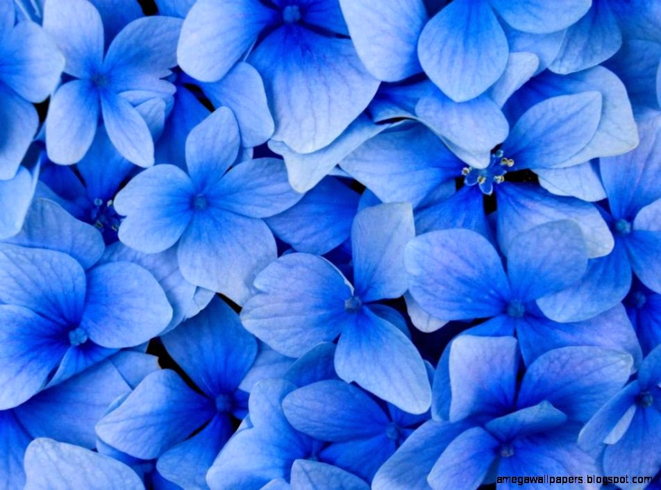 Beautiful Blue Flowers Wallpapers Beautiful Blue Flowers
