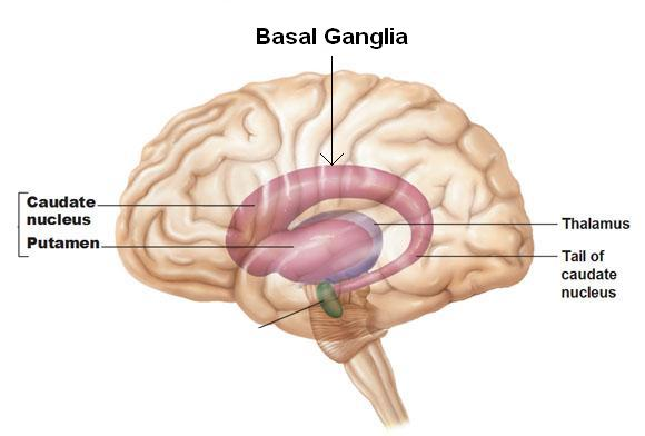 Books Secrets: The power of habit - Review Ventral Sheep Brain