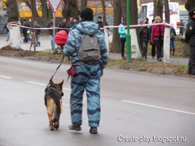 собака проверяет дорогу на взрывчатку