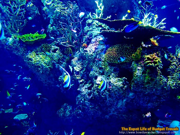 bowdywanders marine park s e a aquarium world s largest aquarium