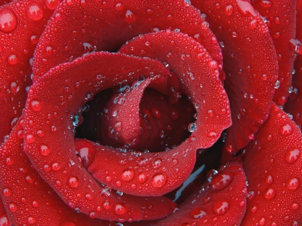 -pozadine-za-desktop-slike-biljke-cvijece-cestitka-za-osmi-mart.jpg